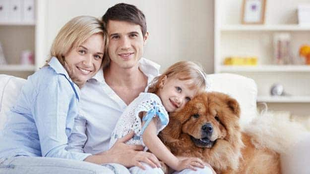 Wills & Trusts dog-young-family Direct Wills Hall Green